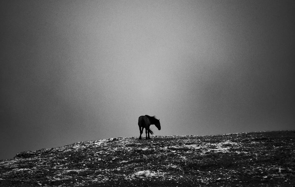 wild_horse_range_june_2017_14web.jpg