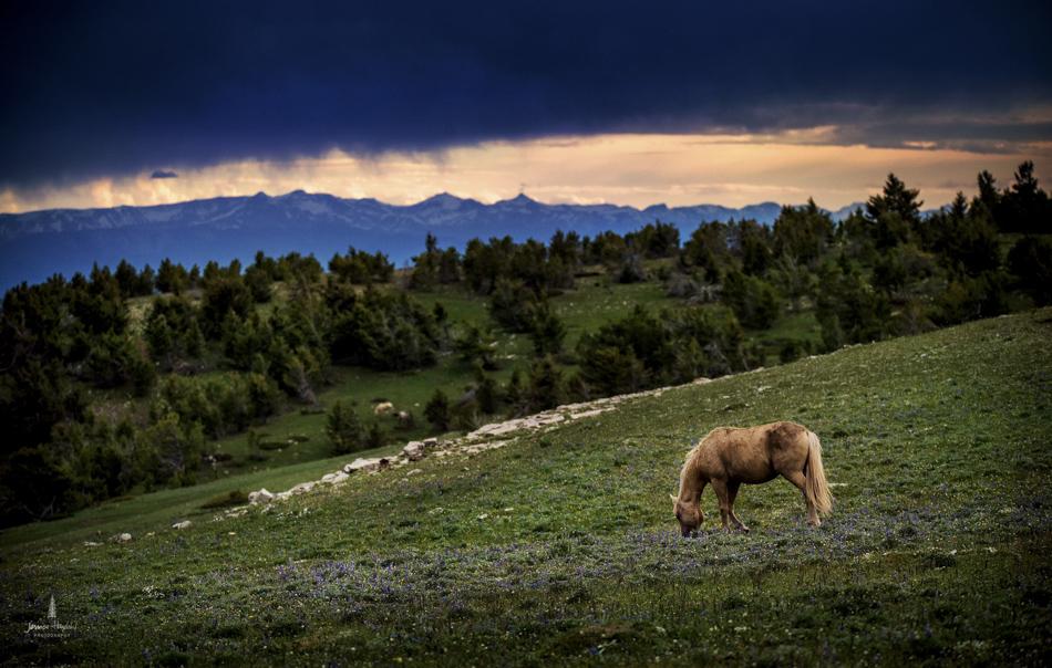 wild_horse_range_june_2017_15web.jpg