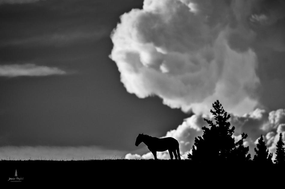 wild_horse_range_june_2017_19web.jpg