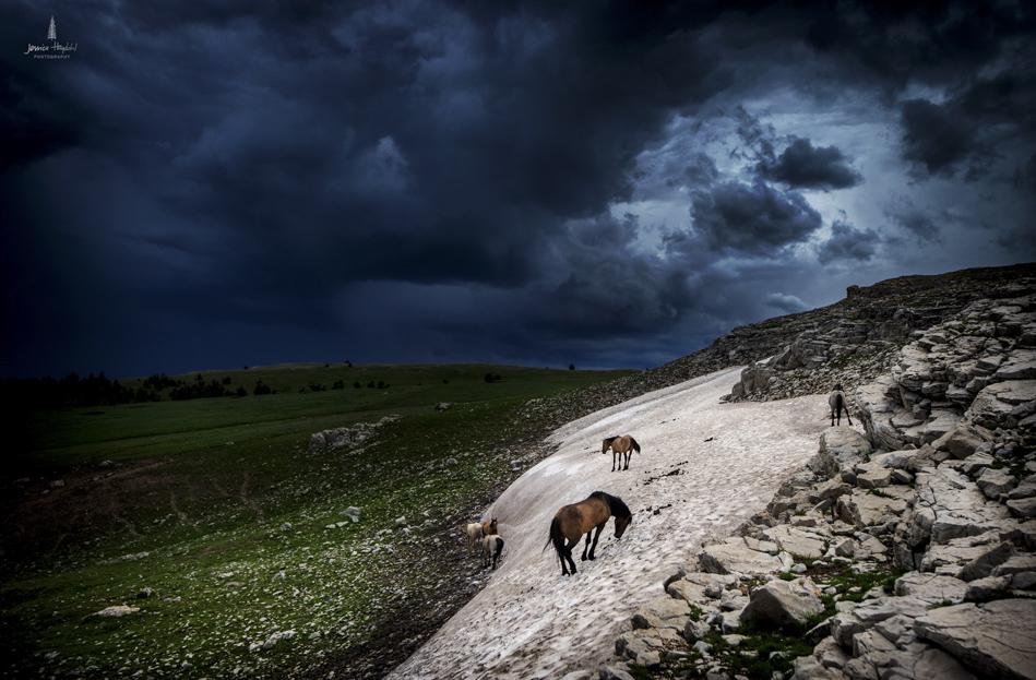 wild_horse_range_june_2017_24web.jpg