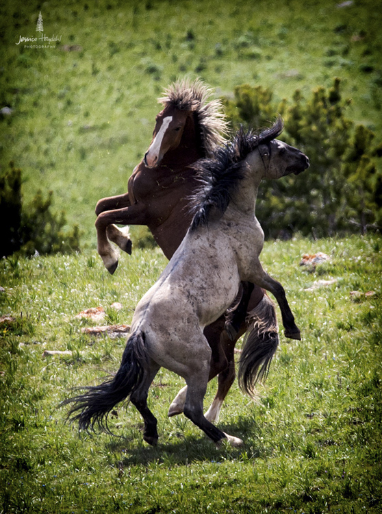 wild_horse_range_june_2017_28web.jpg