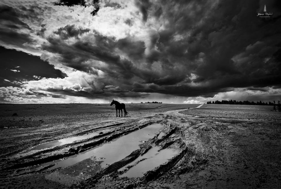 wild_horse_range_june_2017_2web.jpg