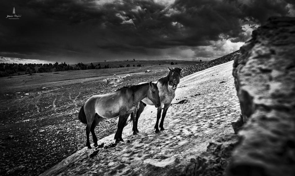 wild_horse_range_june_2017_31web.jpg