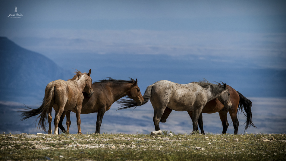 wild_horse_range_june_2017_32web.jpg