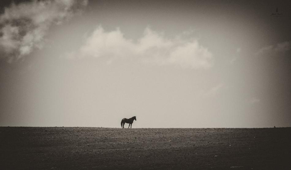 wild_horse_range_june_2017_34web.jpg