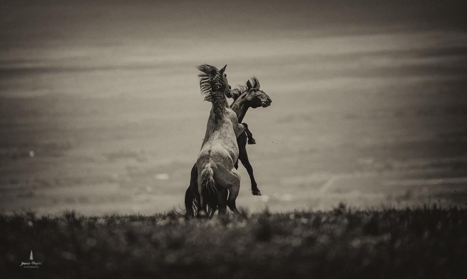 wild_horse_range_june_2017_38web.jpg