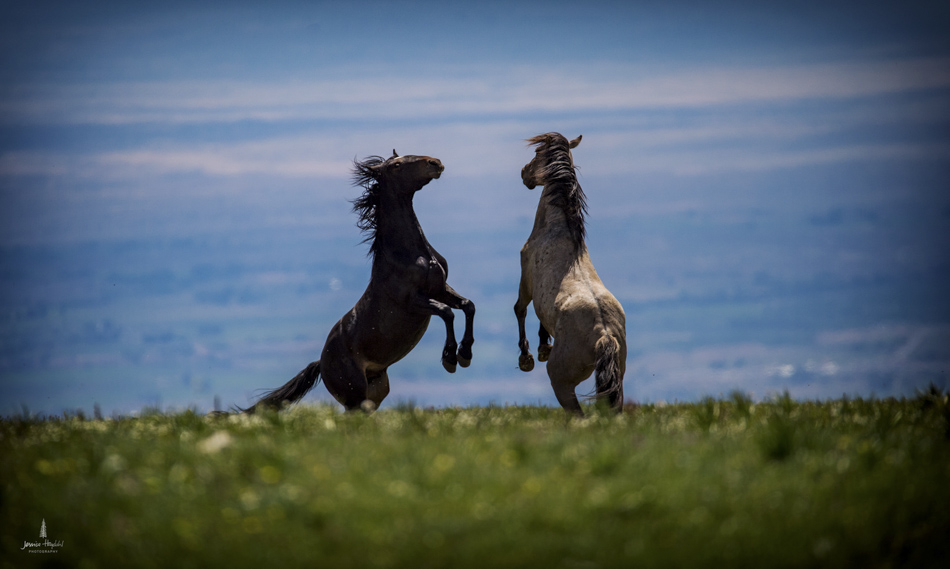wild_horse_range_june_2017_39web.jpg