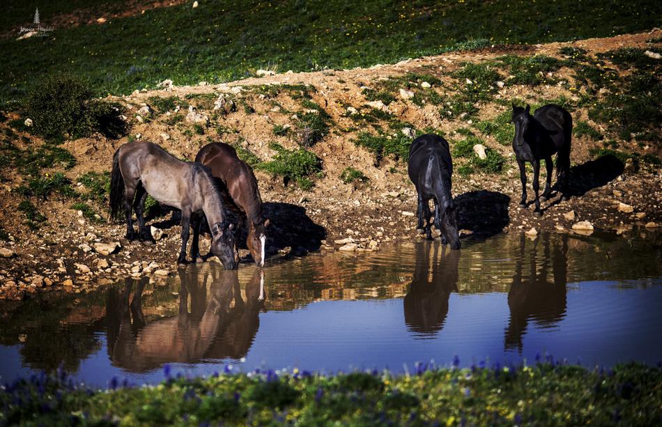 wild_horse_range_june_2017_56web.jpg