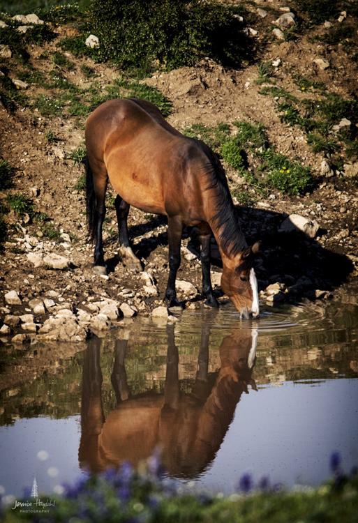 wild_horse_range_june_2017_57web.jpg