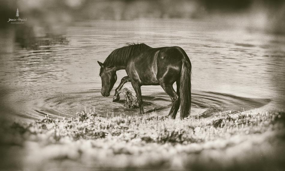 wild_horse_range_june_2017_59web.jpg