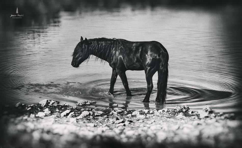 wild_horse_range_june_2017_62web.jpg
