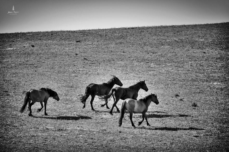 wild_horse_range_june_2017_63web.jpg