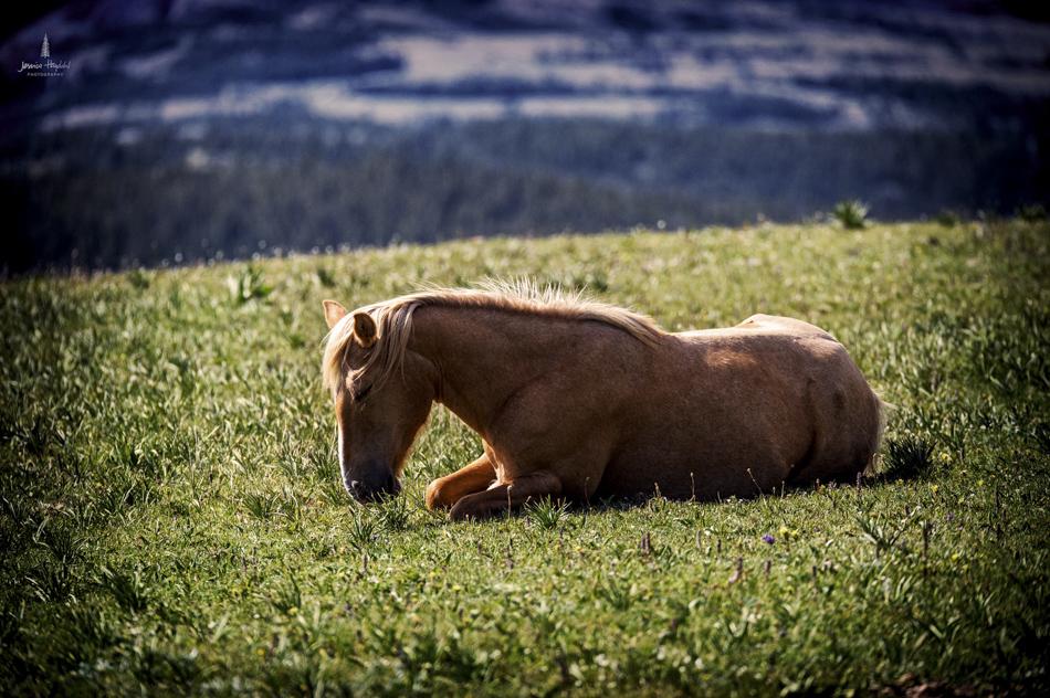 wild_horse_range_june_2017_66web.jpg