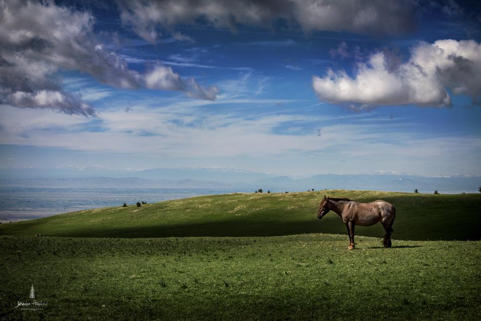 wild_horse_range_june_2017_9web.jpg