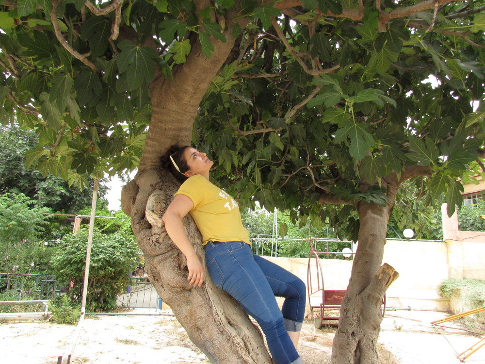 Happy travels from me and my one true love: a Syrian fig tree.