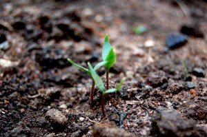seedgrowth