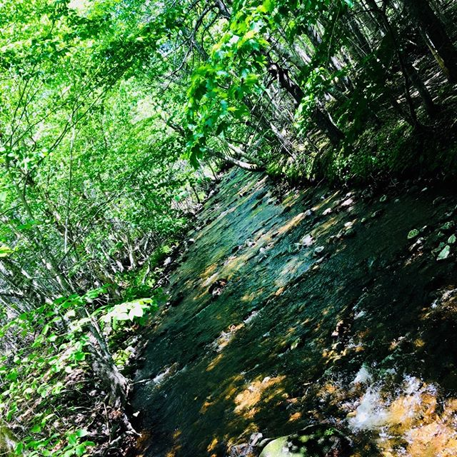 An easy walk along MacIntosh brook under the canopy of a hardwood forest and you will find yourself at one the areas waterfalls! #MacIntoshbrook #pleasantbay #truenorthdestinations