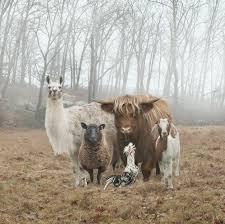 congress of animals.jpeg