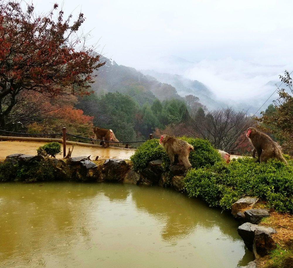 uprooted-traveler-Monkey-Park-Iwatayama-Arashiyama-kyoto.jpg