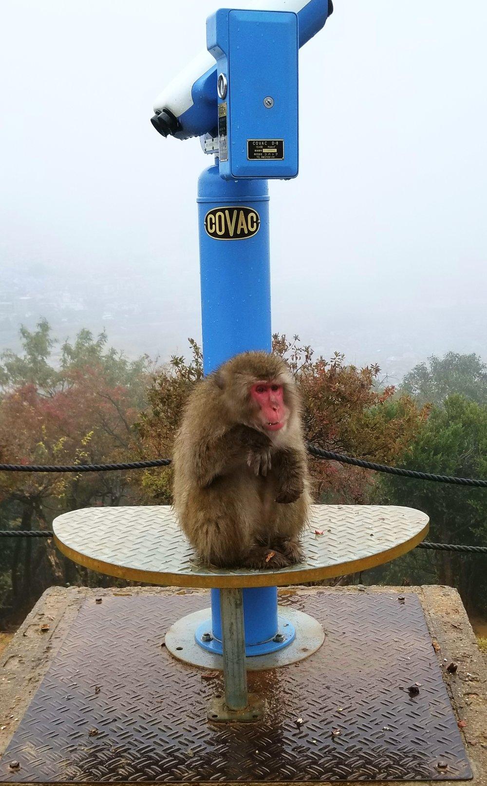 uprooted-traveler-Monkey-Park-Iwatayama-Arashiyama-kyoto-15.jpg