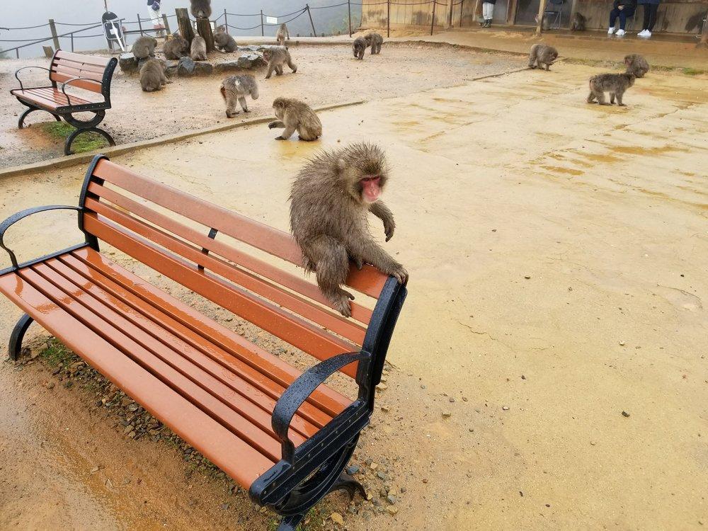 uprooted-traveler-Monkey-Park-Iwatayama-Arashiyama-kyoto-2.jpg