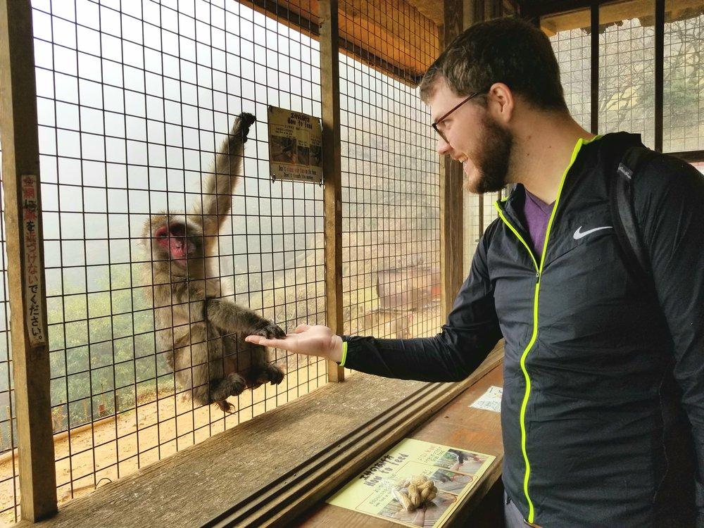 uprooted-traveler-Monkey-Park-Iwatayama-Arashiyama-kyoto-9.jpg