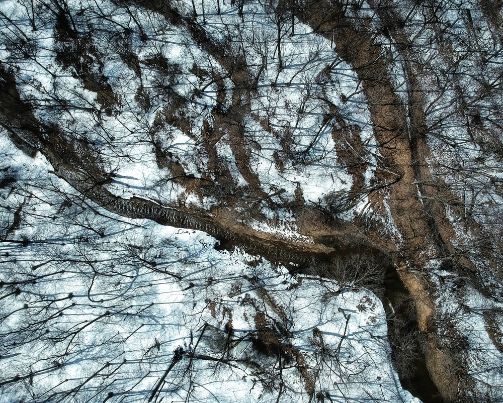 uprooted-traveler-nerstrand-big-woods-aerial.jpeg