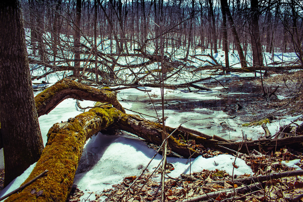 uprooted-traveler-nerstrand-big-woods-state-park-hiking-minneapolis.jpg