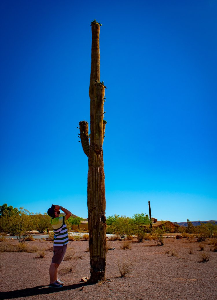 uprooted-traveler-arizona-vegan-road-trip-phoenix-saguaro-cactus-forest.jpg