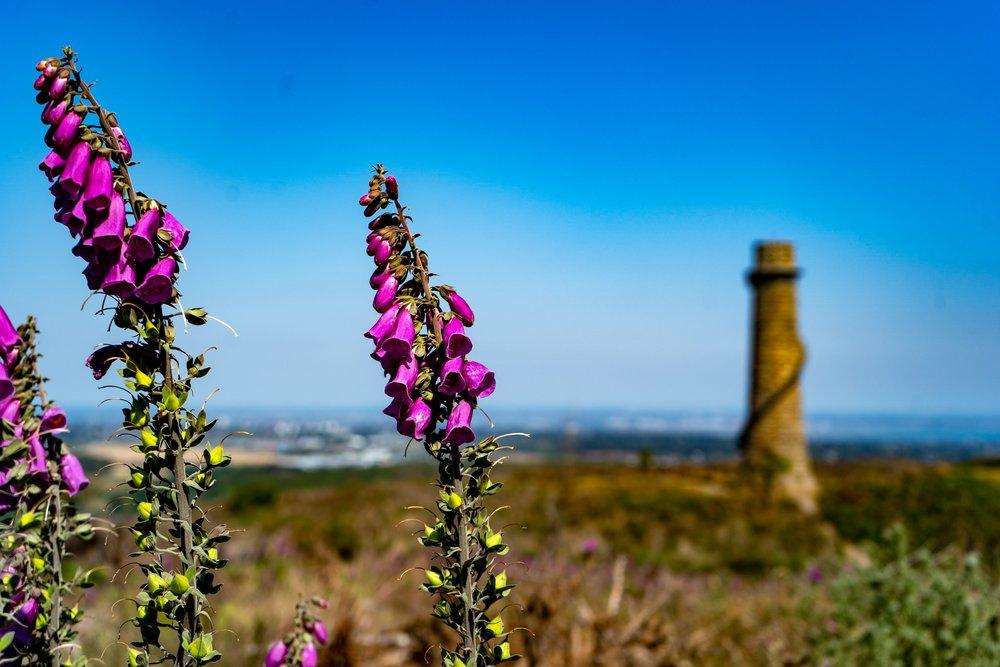 uprooted-traveler-dublin-Barnaslingan -mountains-wildflower-hiking-vegan-guide-ireland.jpg