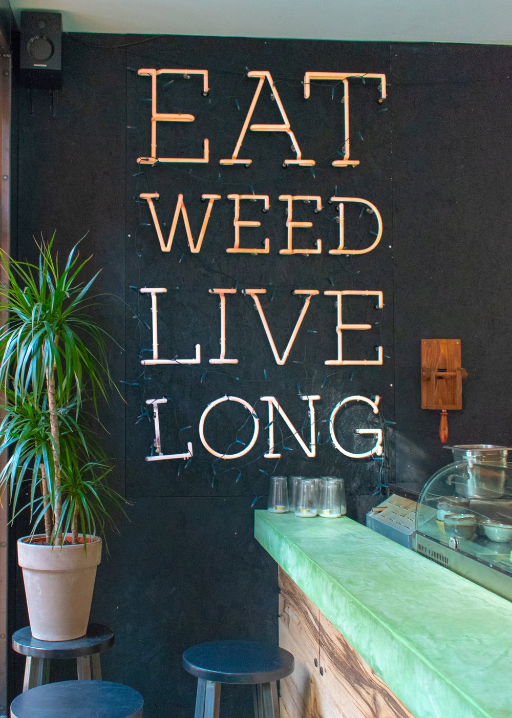 Uprooted-Traveler-Amsterdam-dutch-weed-burger-joint-live-long-seaweed-vegan-guide.jpg