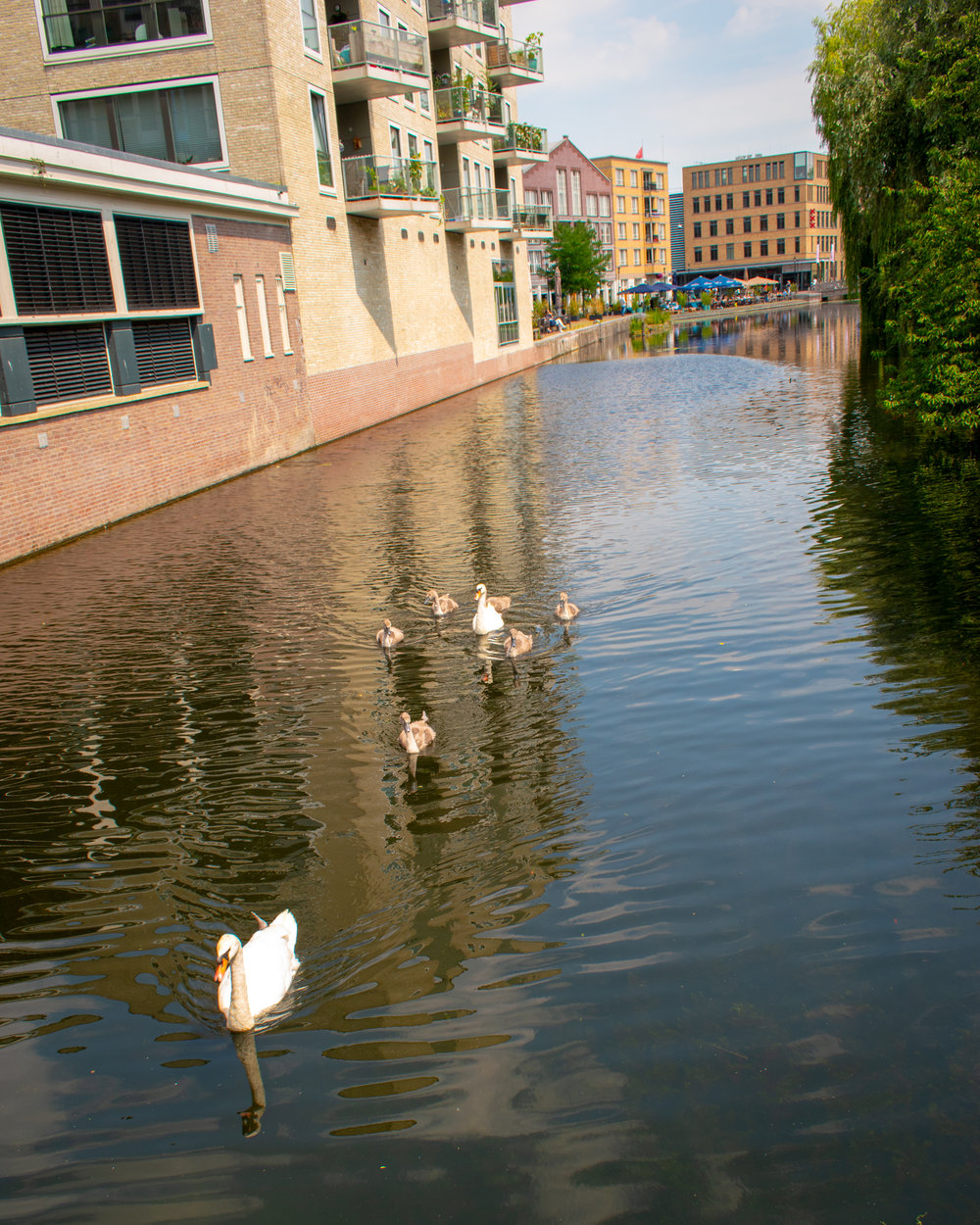 Uprooted-Traveler-Amsterdam-vegan-guide-swans-canal.jpg