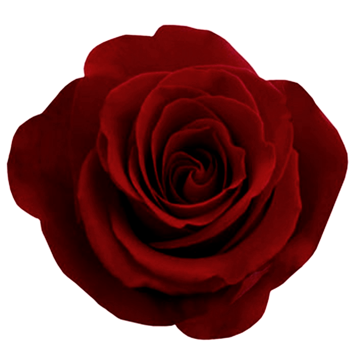 Gothic-Rose-PNG-Photos.png