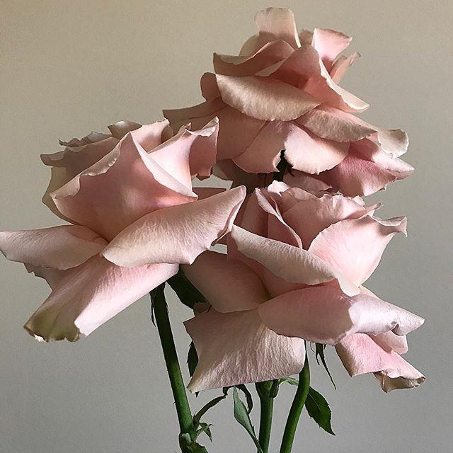 When one isn't enough 🔮// . . . . . . #prophire #styling #floraldesign #floristry #flowers #events #parties #engagements #weddings #sydney #lunarandfox @harryswholesale
