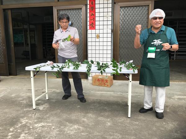 Steve Huang and Thomas Shu explaining the various Taiwan tea cultivars.