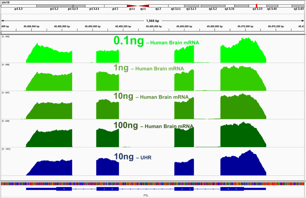 Uniform coverage obtained from a broad range of RNA concentration. Traces represent coverage of the  FTL transcript, rich in GC content . Transcript is a difficult to cover using popular commercial kits. The green traces represent different sample inputs: respectively from a top 0.1ng, 1ng, 10ng and 100ng of Human Brain mRNA. Bottom trace (blue) was generated with 10ng of UHR RNA which was Ribo-depleted.