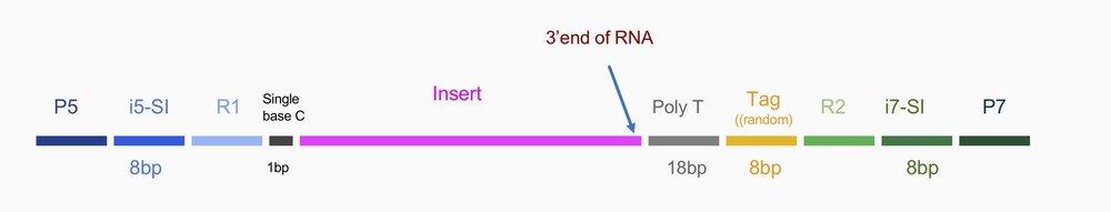 Complete RNA Molecule.jpg