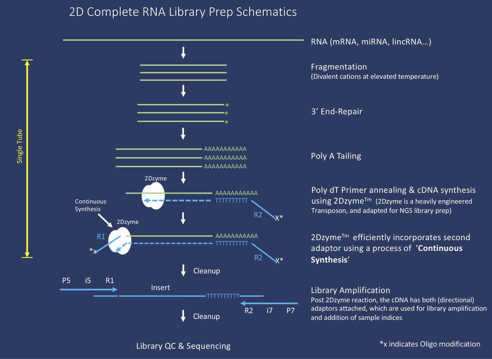 2D Complete RNA Schematics.jpg