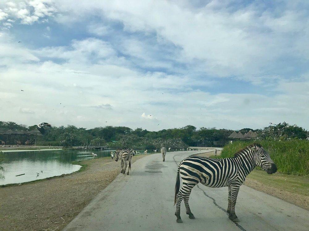 Safari World and Marine Park, Bangkok, Thailand