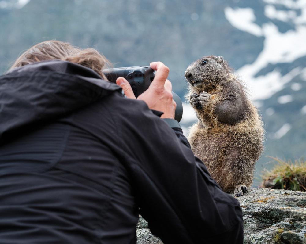 Tom Svensson med ett poserande murmeldjur.