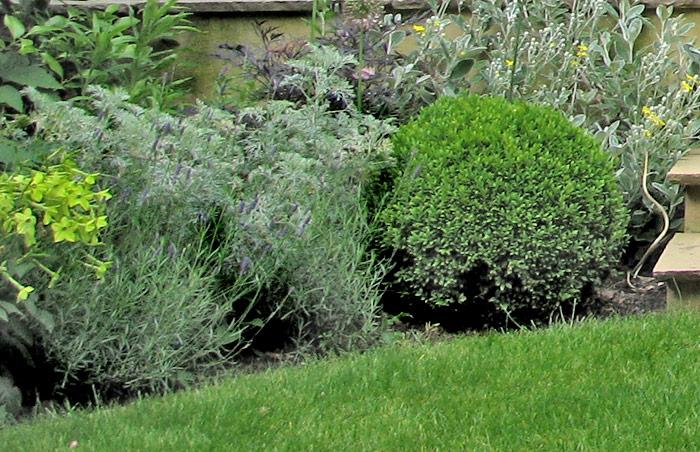 garden_5_07.jpg