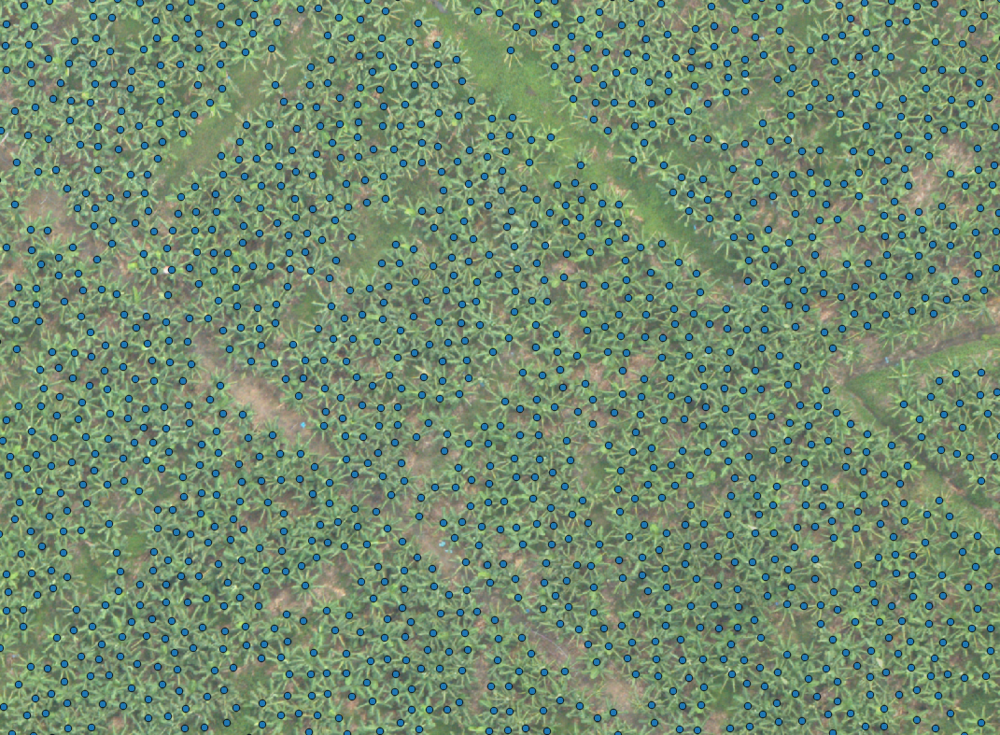 PLANT COUNT