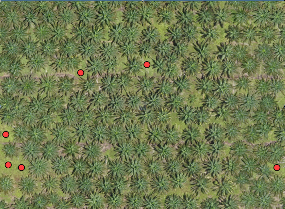 DETECTED UNPLANTED AREAS