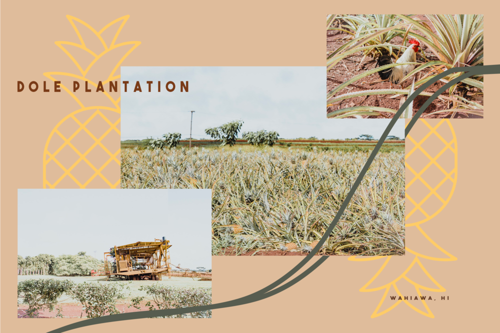 Dole Postcard (Adobe Photoshop 2019)