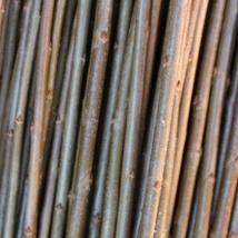 Long Bud   Salix   Triandra gruppen   En god flette-pil som også egner seg godt til levende pileflett, grønn i bunnen og nesten brunaktig oppover hvor den får sol.   Long Bud kan kjøpes som:   - Stikling -Levende pil