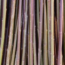 Rød Amerikaner    Salix Fragilis Americana    Rødbrun i farge. En veldig populær flettepil som er bløt og smidig. Velegnet til all flett, levende og tørket.   Rød Amerikaner kan kjøpes som:   - Stikling - Levende pil - Flettepil