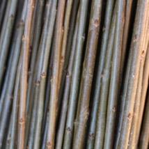 Long Bud   Salix Triandra gruppen   En god flette-pil som også egner seg godt til levende pileflett, grønn i bunnen og nesten brunaktig oppover hvor den får sol.   Long Bud kan kjøpes som:   - Stikling - Levende pil