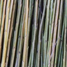 Laubærpil   Salix Pentandra Amarum Arenarie   En lav og kraftig pil, god flettepil egner seg til staker. Flott som levende pil med sitt blanke vakre bladverk.   Laubærpil kan kjøpes som:   - Stikling