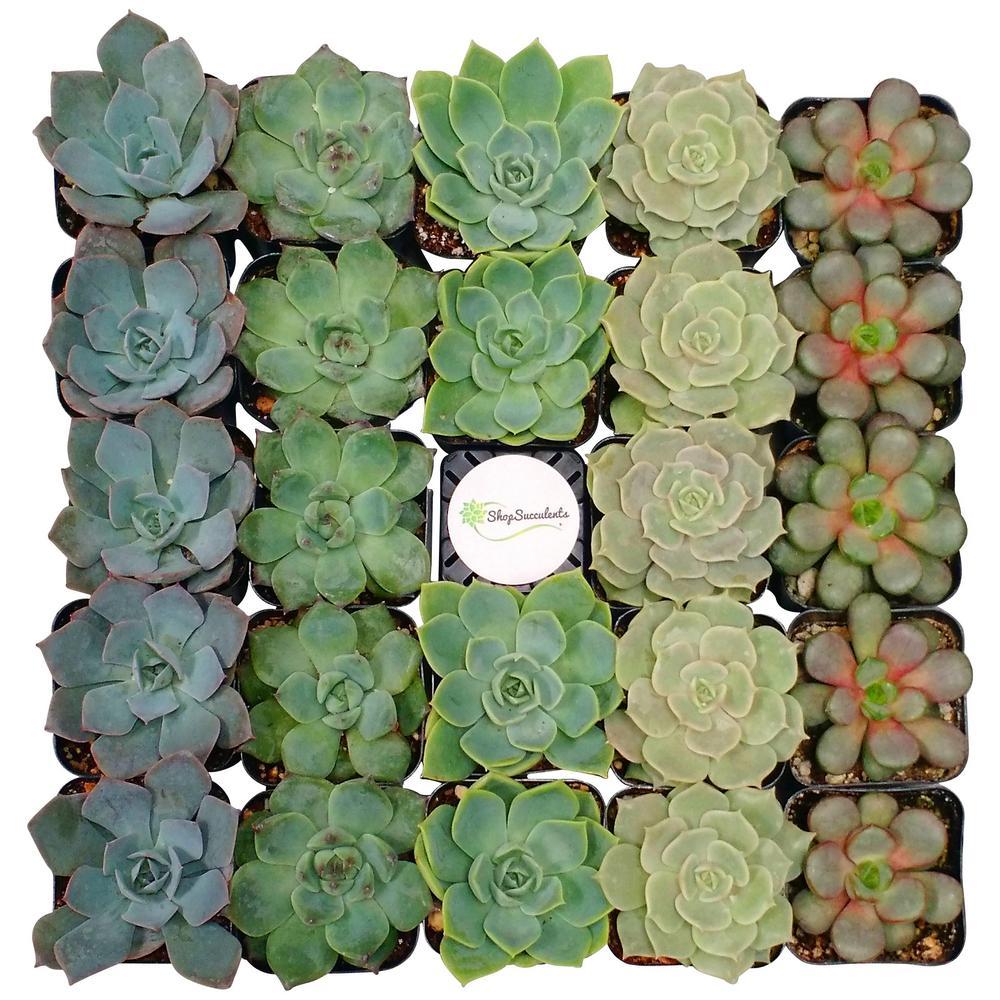 succulents-cactus-plants-r32-64_1000.jpg