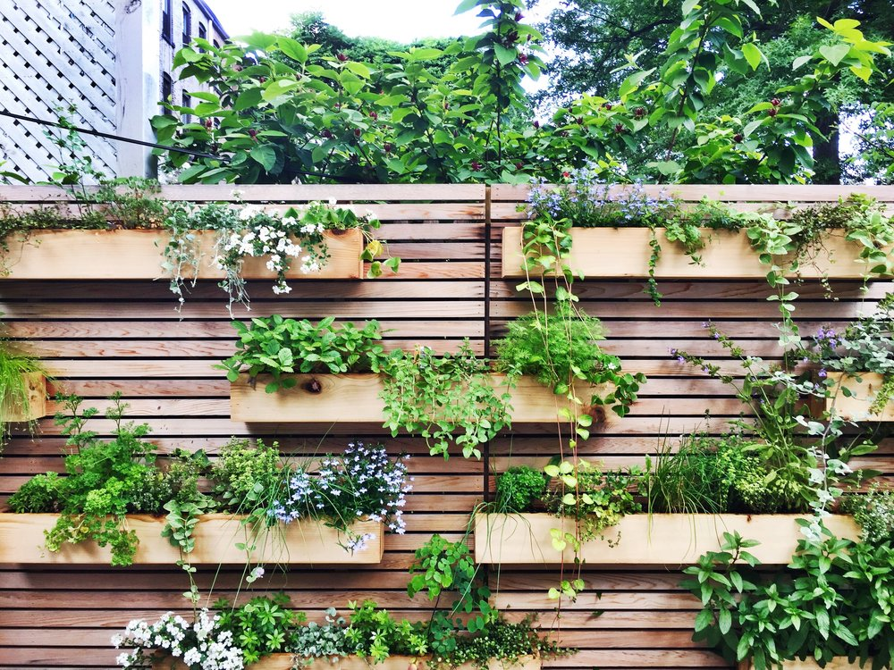 Good Plants for Planters